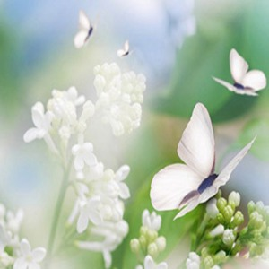 butterfly-white-flowers-design